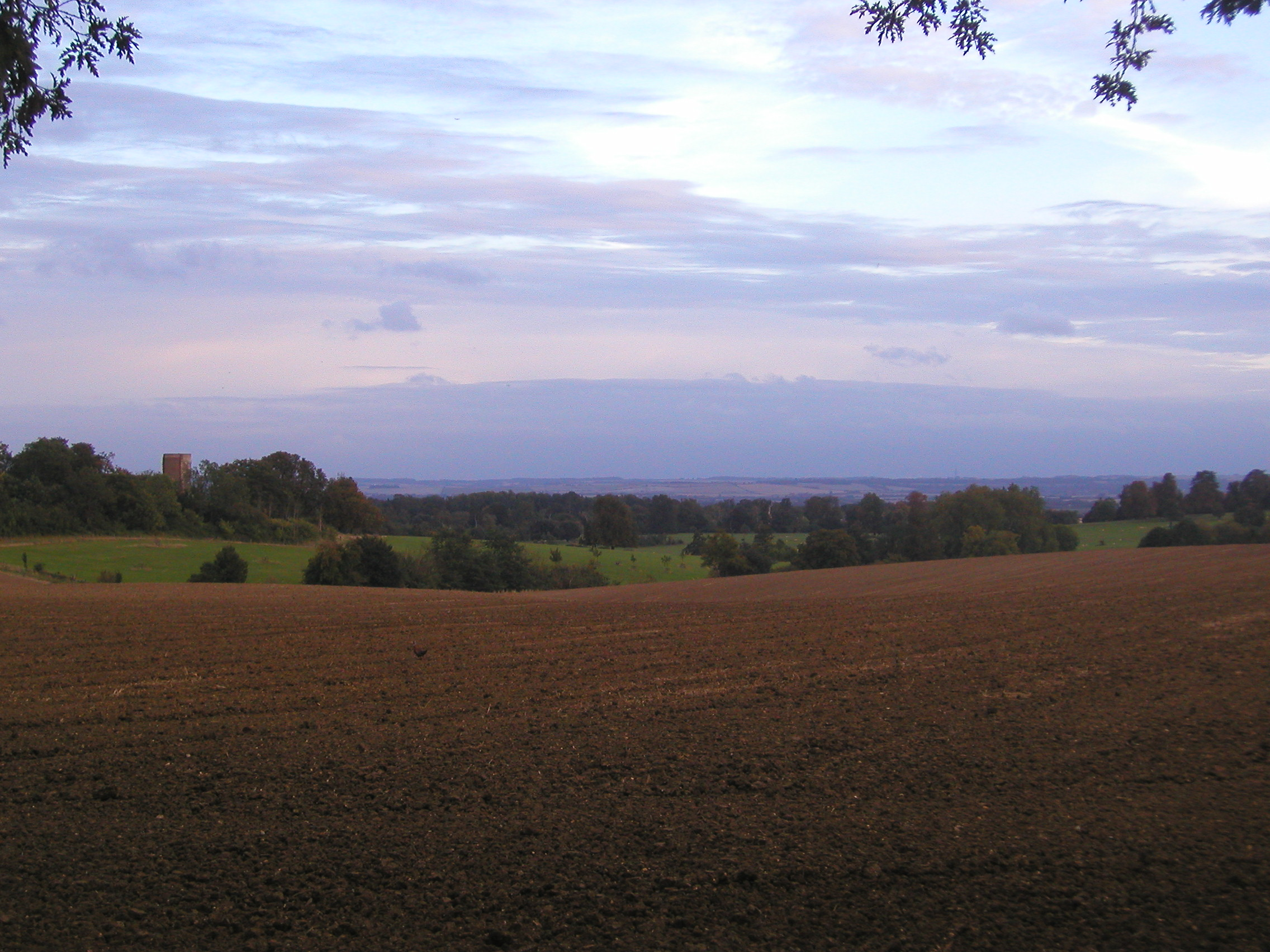 The Royston hills from the belt above the folly at Wimpole