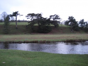 The river bank at Chatsworth is characteristic of the cedar's tendency to cluster