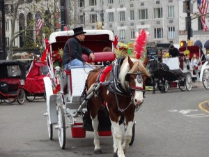 Central Park carriages (1)