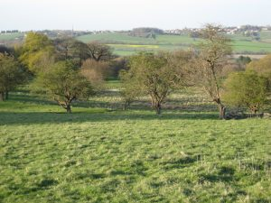 The thorn in the middle ground, east of the house, prevent the exposure of the obviously artificial and narrow serpentine without obstructing views to the ancient city'. The trees on the spoil heap break the horizon on the left of the picture.